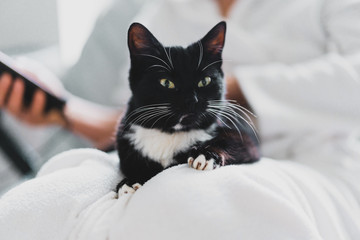Black and white cat lays on the owner in white bathrobe. Cozy atmosphere at home. Love