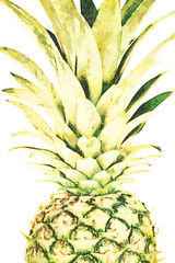 Trendy home interior decoration canvas - single ripe and whole pineapple isolated on a white background (watercolor effect)