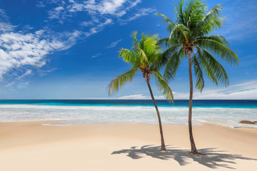 Tropical paradise beach. Palm trees on tropical white sand sunny beach