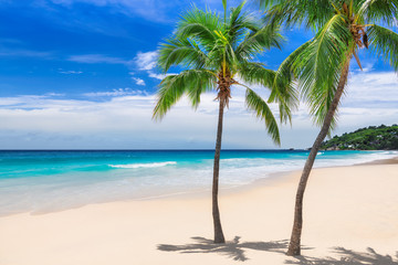 Wall Mural - Palm trees on sunny beach tropical sea  paradise island. Background.