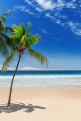 Palm trees on Sunny beach and turquoise sea