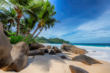 Photo sur Plexiglas Plage Tropical exotic beach and coconut palms