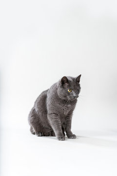 Katze mit einem Auge auf hellem Hintergrund