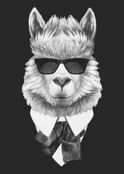 Portrait of Llama in suit. Hand-drawn illustration. Vector isolated elements.