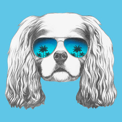 Portrait of Cavalier King Charles Spaniel with sunglasses. Hand-drawn illustration. Vector isolated elements.