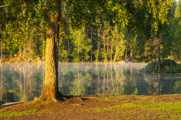 Fototapeten Wald Fog on mirror clear lake at sunrise