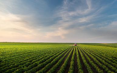 Foto auf AluDibond Kultur Tractor spraying soybean field in sunset.