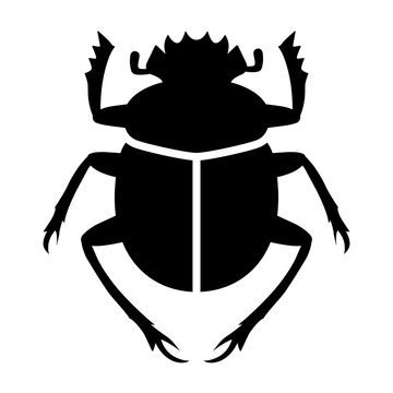 Scarabaeus sacer / sacred scarab dung beetle flat vector for apps and websites