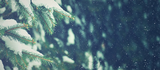 Winter Season Evergreen Christmas Tree Pine Branches With Snow and Falling Snowflakes, Horizontal