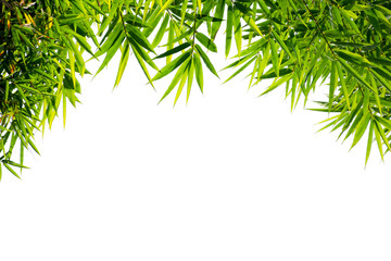 Bamboo leaves isolated on white background. Use for frame design of your picture or product.