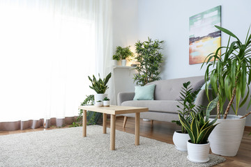 Stylish interior of living room with green houseplants