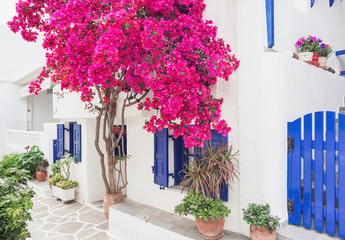 Poster Mediterranean Europe Traditional greek house with flowers in Paros island, Cyclades, Greece