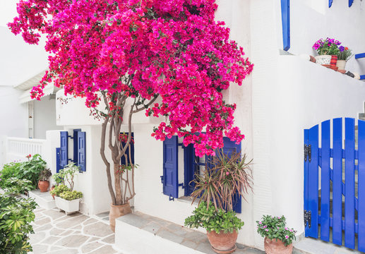 Traditional greek house with flowers in Paros island, Cyclades, Greece