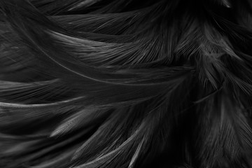 Stores à enrouleur Cygne Beautiful dark black feather pattern texture background