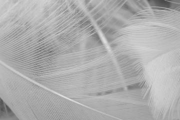 Beautiful macro white feather swan pattern texture background