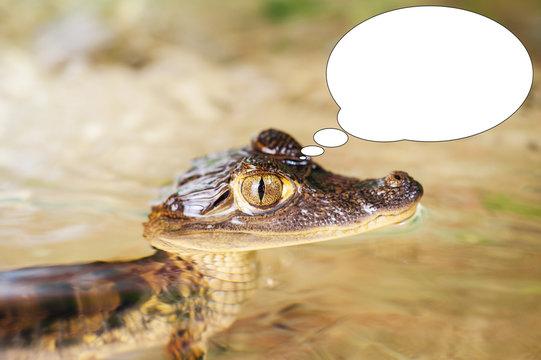 Soft focus funny picture young crocodile, alligator with bubble idea.