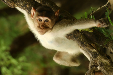 Indian Monkey Pictures