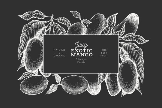 Mango design template. Hand drawn vector tropic fruit illustration on chalk board. Engraved style fruit. Vintage exotic food banner.