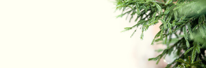 Banner of green spruce branches as a textured background. Beautiful branch of spruce with needles. Christmas tree in nature. Space for text on the left of the frame on a yellow background
