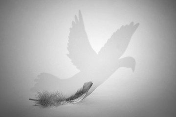 Stores à enrouleur Oiseau Abstract black and white art photo of a feather with shadow of bird