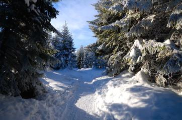 Fototapeta Zimowy las w górach