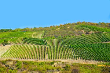 Terraced vineyard along the Rhine River in Germany