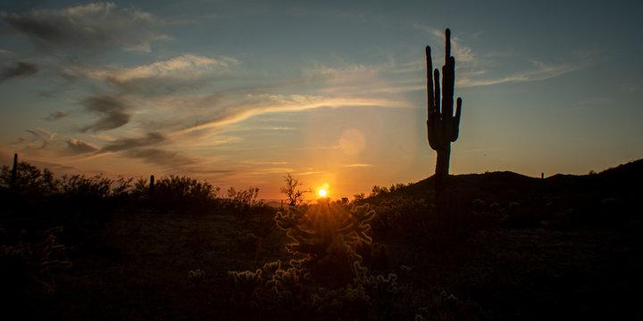 Sonoran Desert sunset with cacti