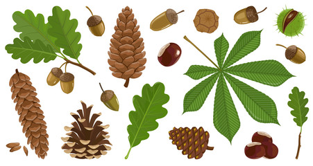Acorn of oak cartoon vector set icon. Vector illustration autumn leaf and nut on white background.Isolated cartoon icon acorn and cone.