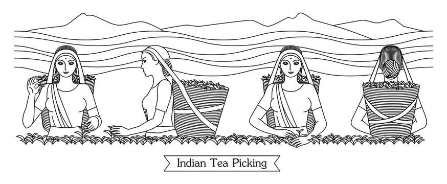 Set of black engraved drawing of Indian women picking tea leaves on the mountain plantation. Harvesters with baskets. Vector illustration isolated on background for packaging tea drink business.