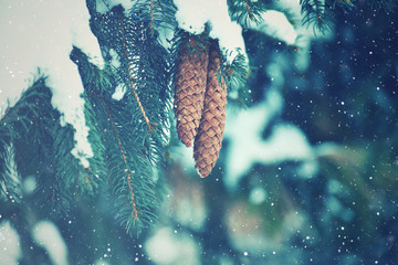 Wall Mural - Winter Fir Branches and Pine Cones Covered With Falling Snowflakes