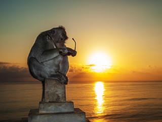 Curious Monkey Sitting and Examining Sunglasses