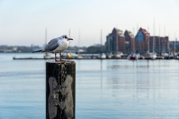 seagull in front of pier