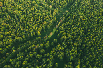 Aerial View Of Green Forest Landscape. Top View From High Attitude In Summer Evening. Small Marsh Bog In Coniferous Forest. Drone View. Bird's Eye View