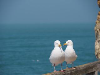seagulls posing at the beach