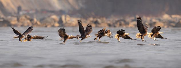 Recess Fitting Bird Bald Eagle Fishing