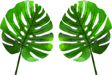 Vector watercolor illustration of monstera leaves for summer theme design element with floral pattern