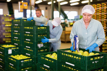 Female employee of fruit warehouse in uniform labeling fresh ripe apples in crates
