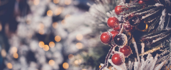 red holly berries and Christmas tree with festive defocused bokeh, holidays background Fototapete
