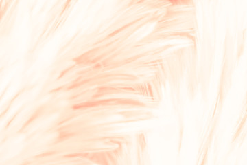 Beautiful abstract colorful white and orange feathers on dark background and soft white pink...