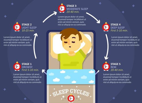 Sleep cycle infographics, vector education diagram, poster
