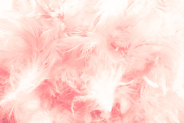 Beautiful abstract colorful white and orange feathers on dark background and soft white pink feather texture on white pattern