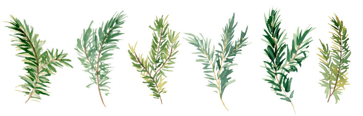 Watercolor fir branches hand drawn illustration