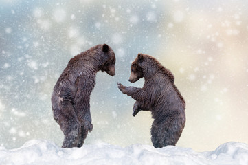 Wall Mural - Bear in a snow on Christmas background
