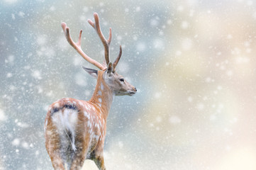 Wall Mural - Deer in a snow on Christmas background