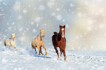 Wall Mural - Horse in a snow on Christmas background