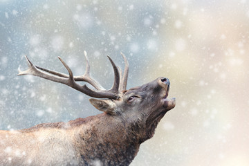 Photo sur Aluminium Cerf Deer in a snow on Christmas background