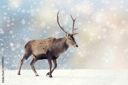 Wall mural Deer in a snow on Christmas background