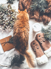 Ginger cat examines winter things : fir  branches, funny kitten socks,wreath, fur blanket. Cozy winter concept. Sweet home scene. Top view. Christmas joy. Insta style. Modern