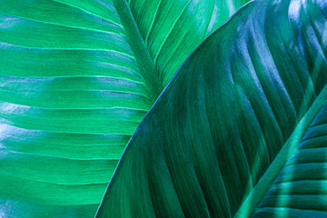 Wall Mural - abstract green leaf textures on dark blue tone, natural green background