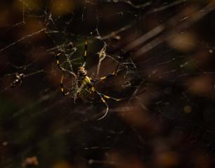 jorou spider